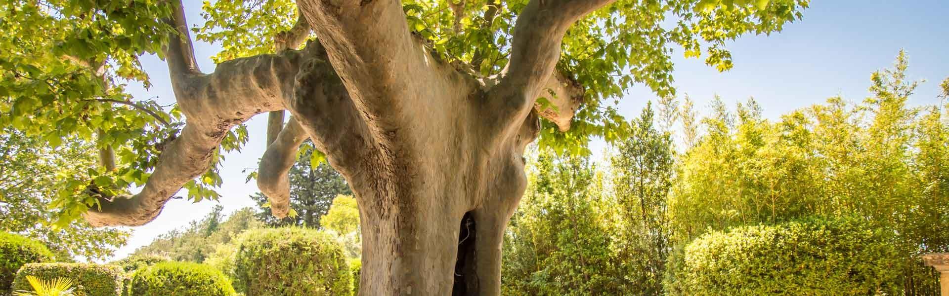 1920x600-ancient-tree